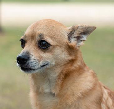 Sparky, Doggies for Dementia Foundation